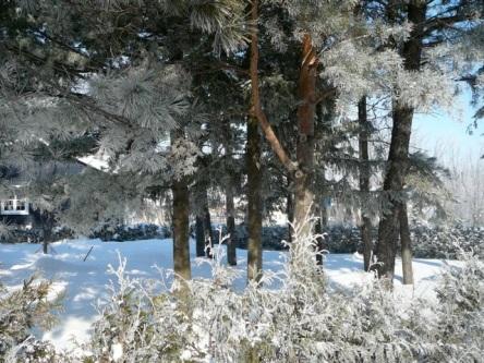Lévis l'hiver - choix - 05
