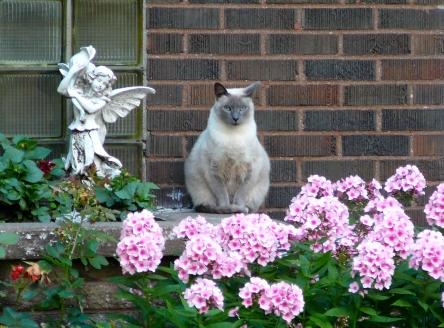 Un chat, un decor, rue Fraser