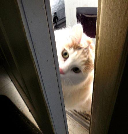 Désolé de te fermer la porte au nez, Pinceau_chat