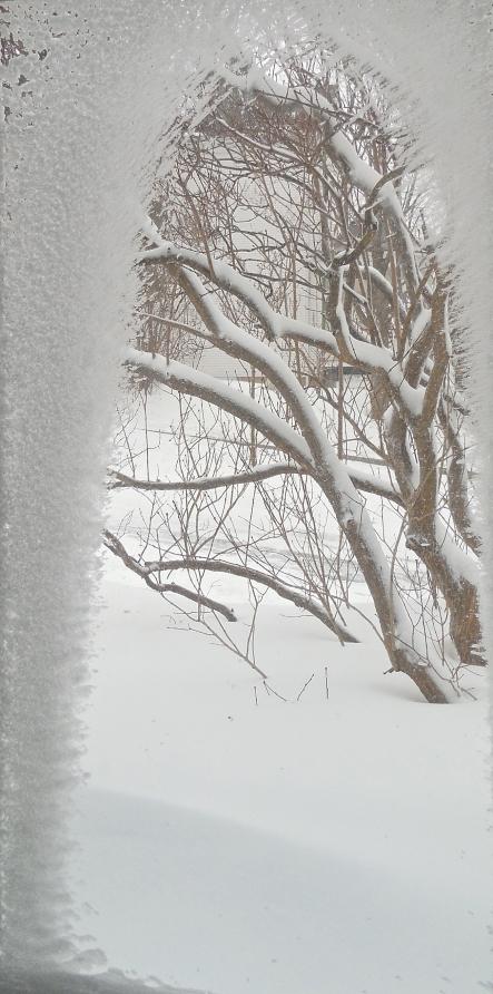 Ma vitre est un jardin de neige 15-03-2015_1 - Version 3