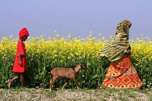 03-10-2014-Women-Development - agence ONU_Femmes_photo de Jashim Salam