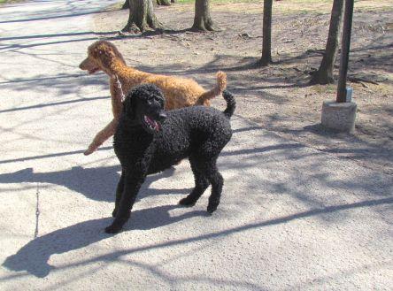 6 Bois de Coulonge_2 chiens_Québec_02-05-2015 - 33