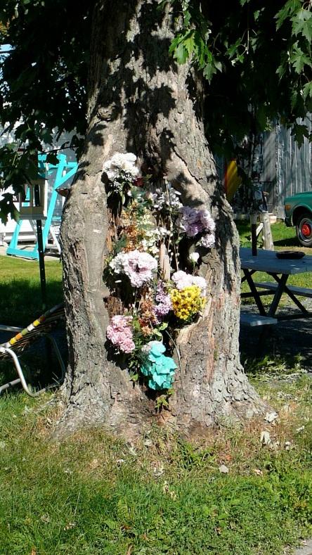 St-Michel Des fleurs dans un arbre 25-08-2006