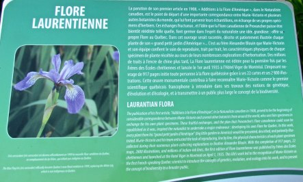 Parc Marie-Victorin 135_Flore Laurentienne 15-08-2015