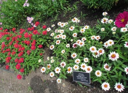 Le monde regorge de beaut s il y en a beaucoup au jardin for Jardin universitaire
